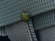 funny bug